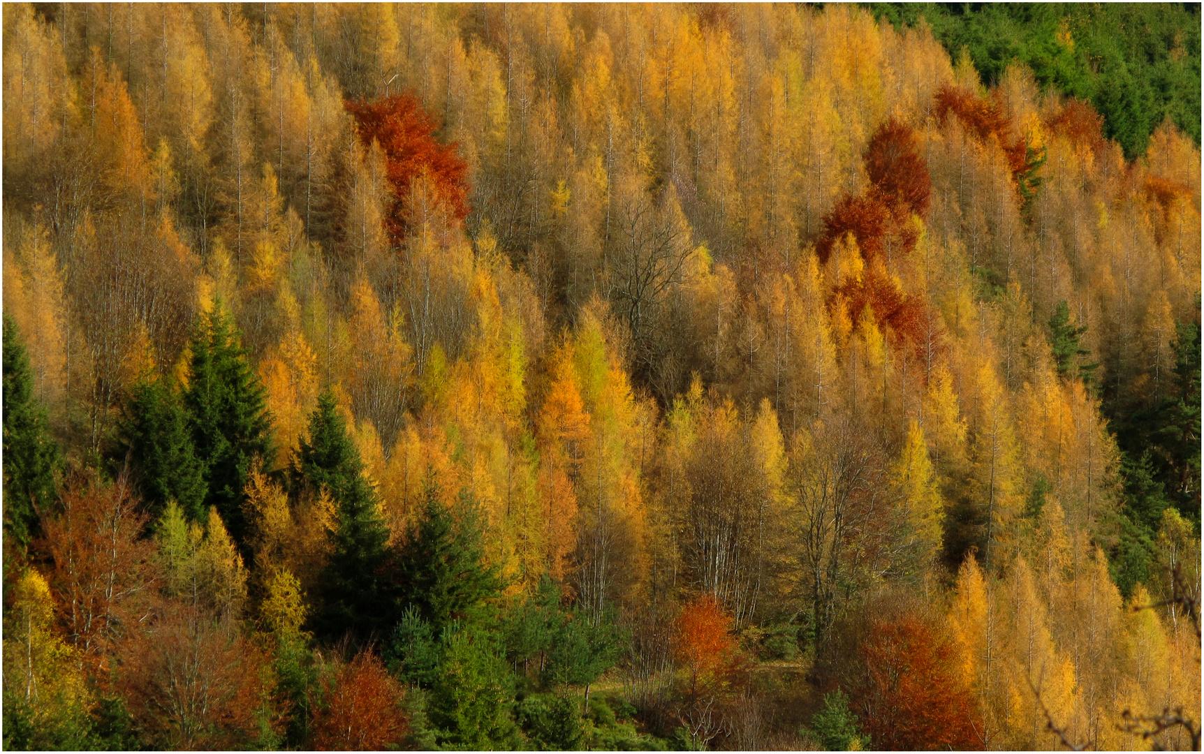 Douce automne