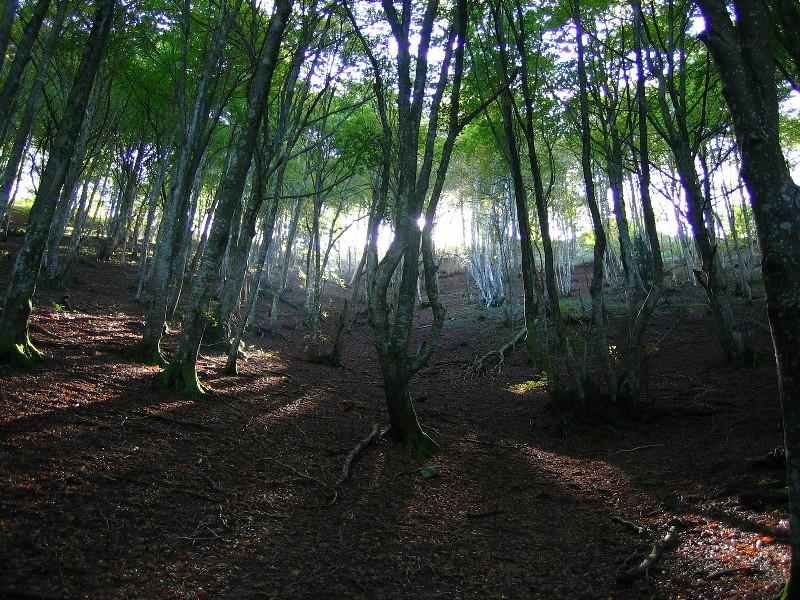 Douce et paisible forêt...