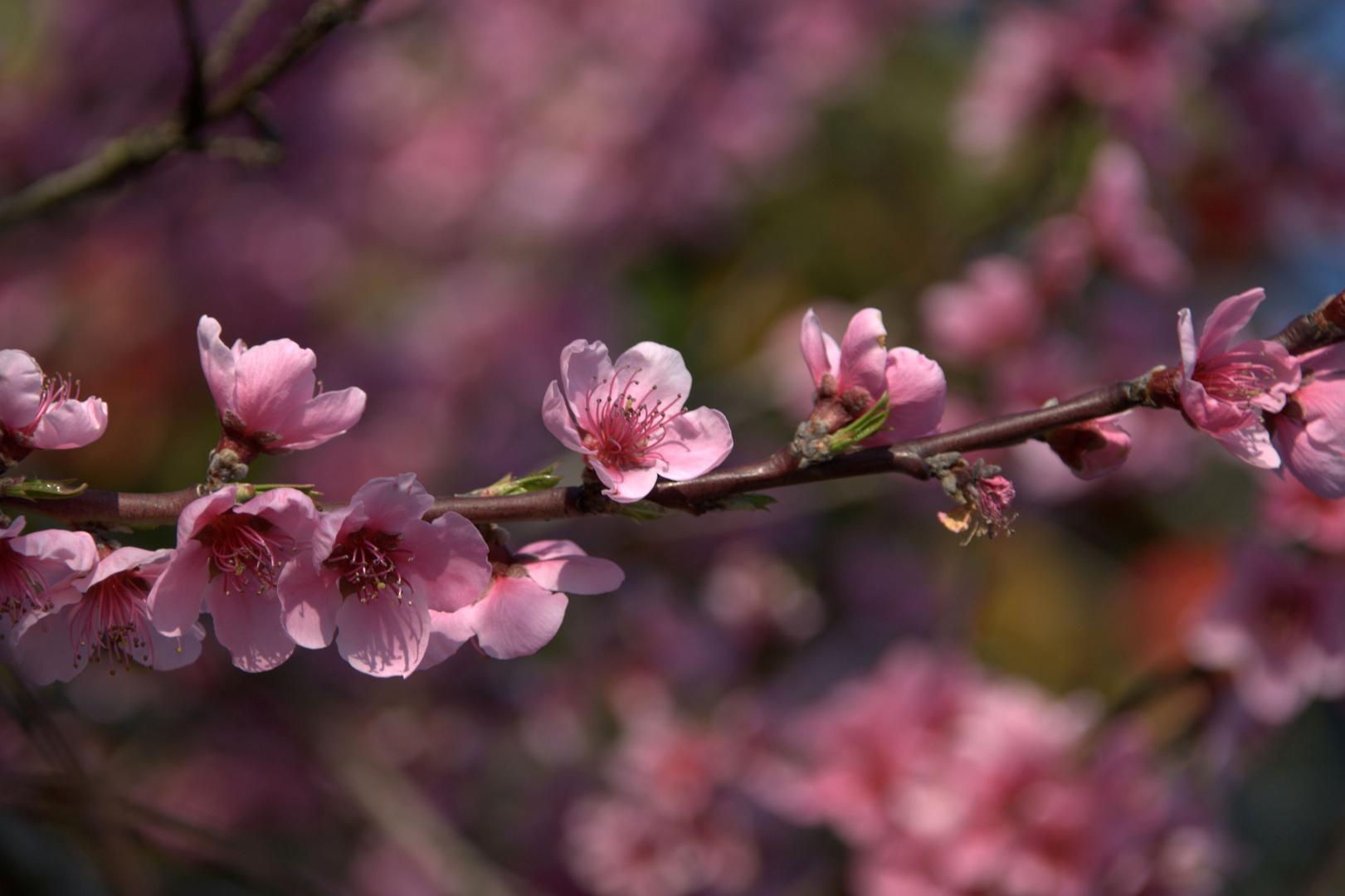 Douceur de printemps