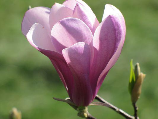 douceur du printemps