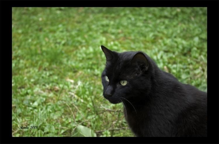 Doudou Jaguar