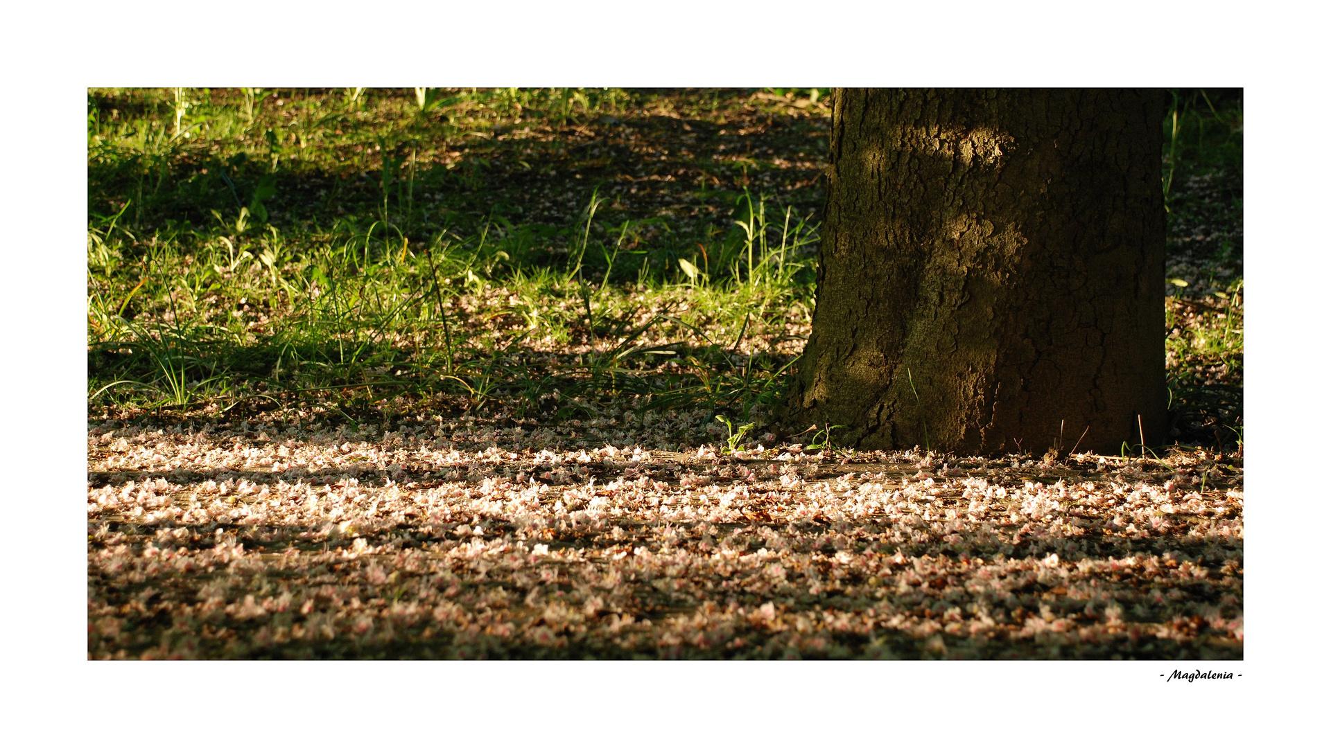 Doux tapis de fleurs
