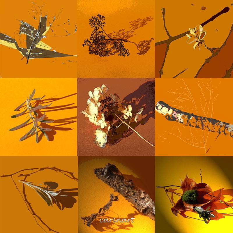 Douze branches