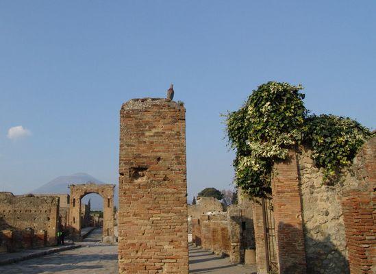 Dove over Ruins