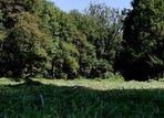 Down im Dobelwald