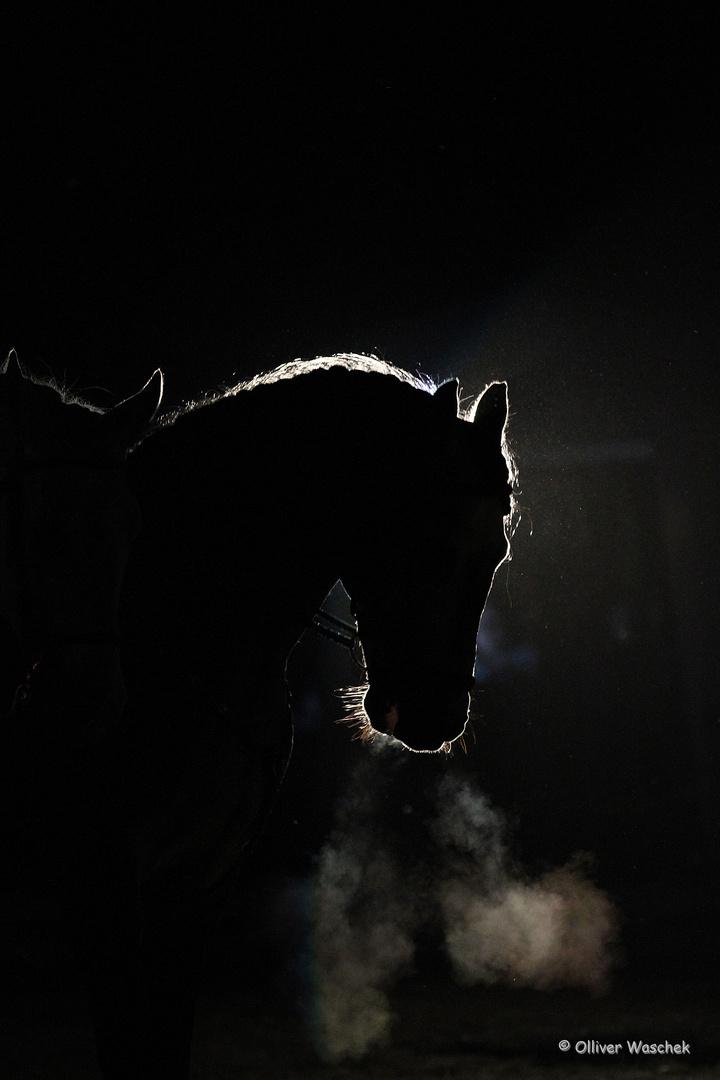 Drache oder Pferd?