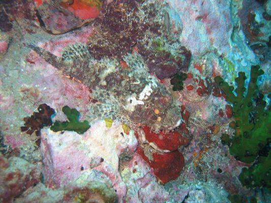 Drachenfisch