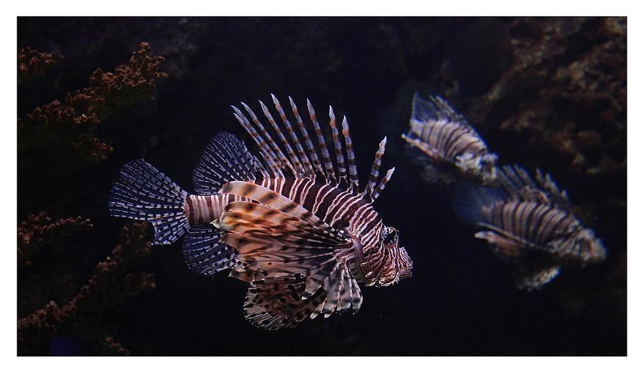 Drachenfisch ISO 3200