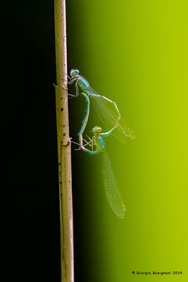 Dragonflies #31