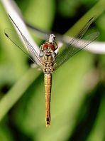 ....Dragonfly....