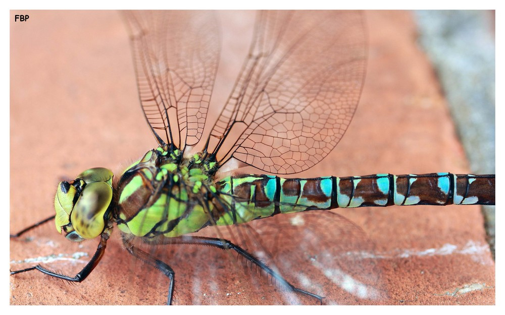 ~ Dragonfly 2 ~