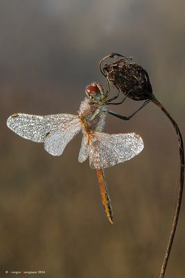 Dragonfly #21
