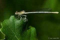 Dragonfly #26