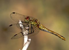 ..........Dragonfly.........