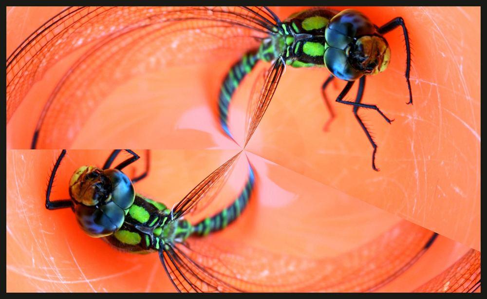 Dragonfly crash