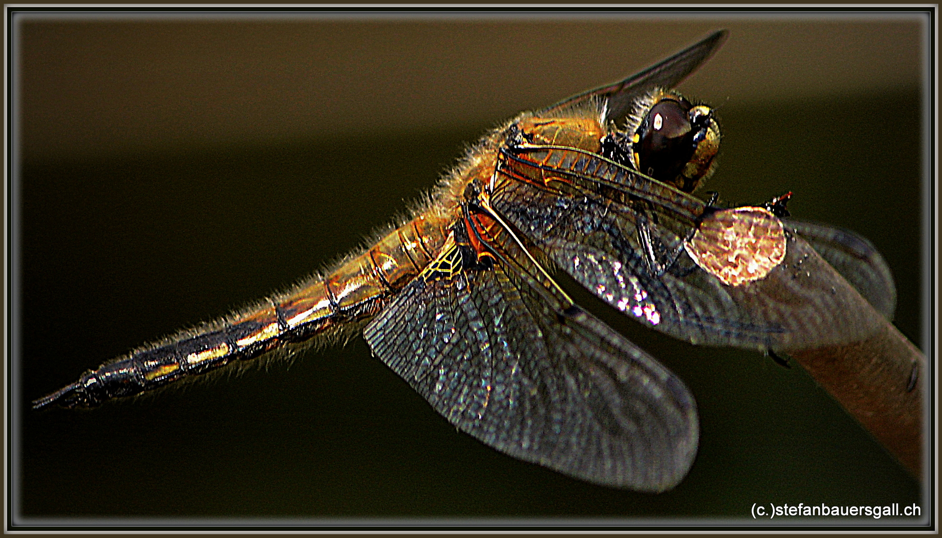 """Dragonfly."""