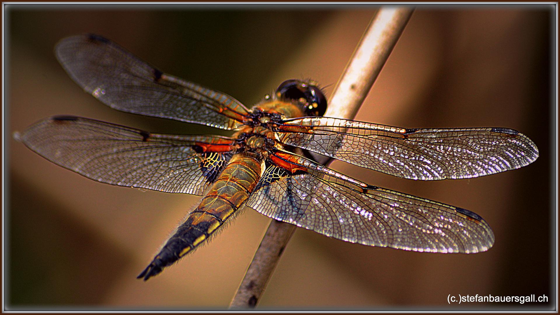 """""""Dragonfly II."""""""