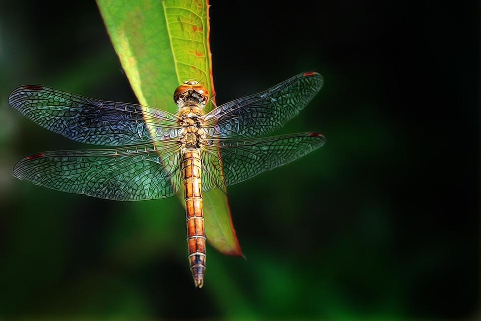 .:: Dragonfly • Illustriert RELOADED • ::.
