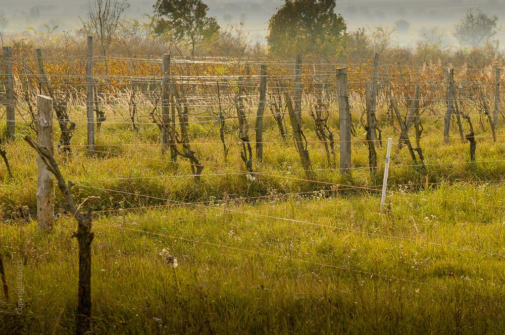 Drahtgewirr im Weingarten