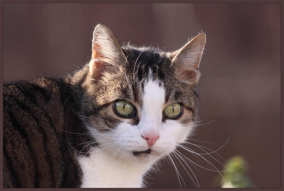 Draußen-Katze