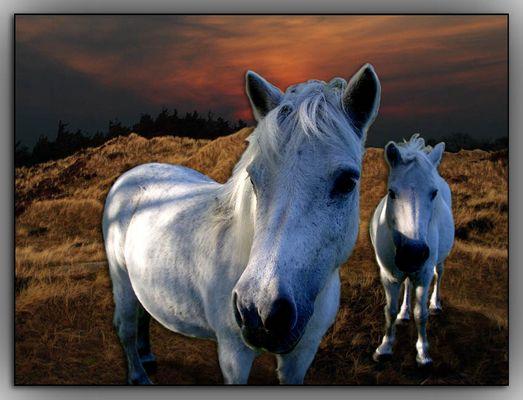 dream horses in the sunset