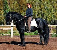 Dream of Horses
