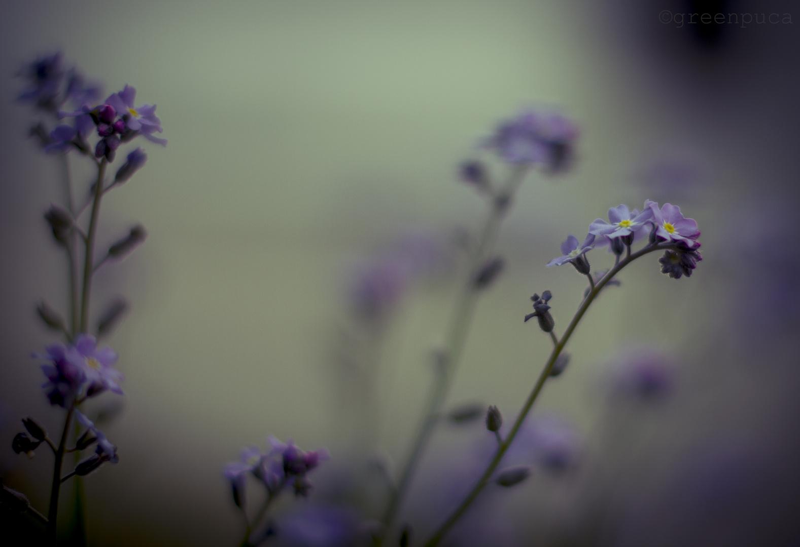~dreamed pastel