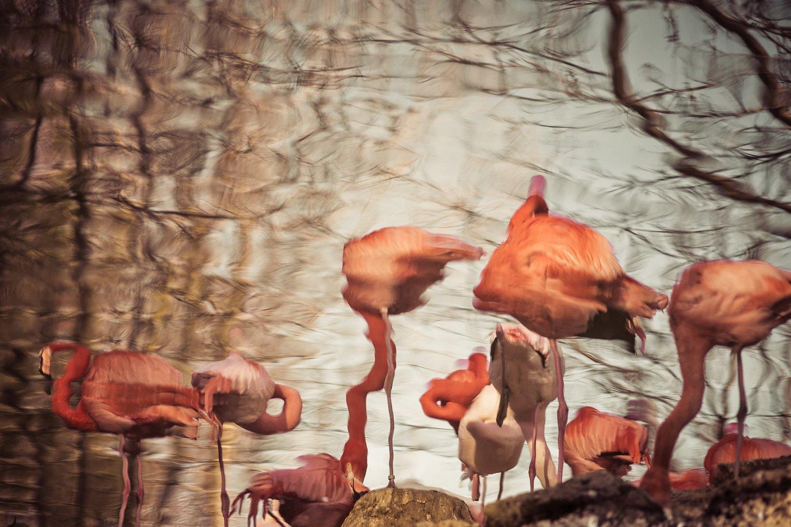 Dreaming Flamingos