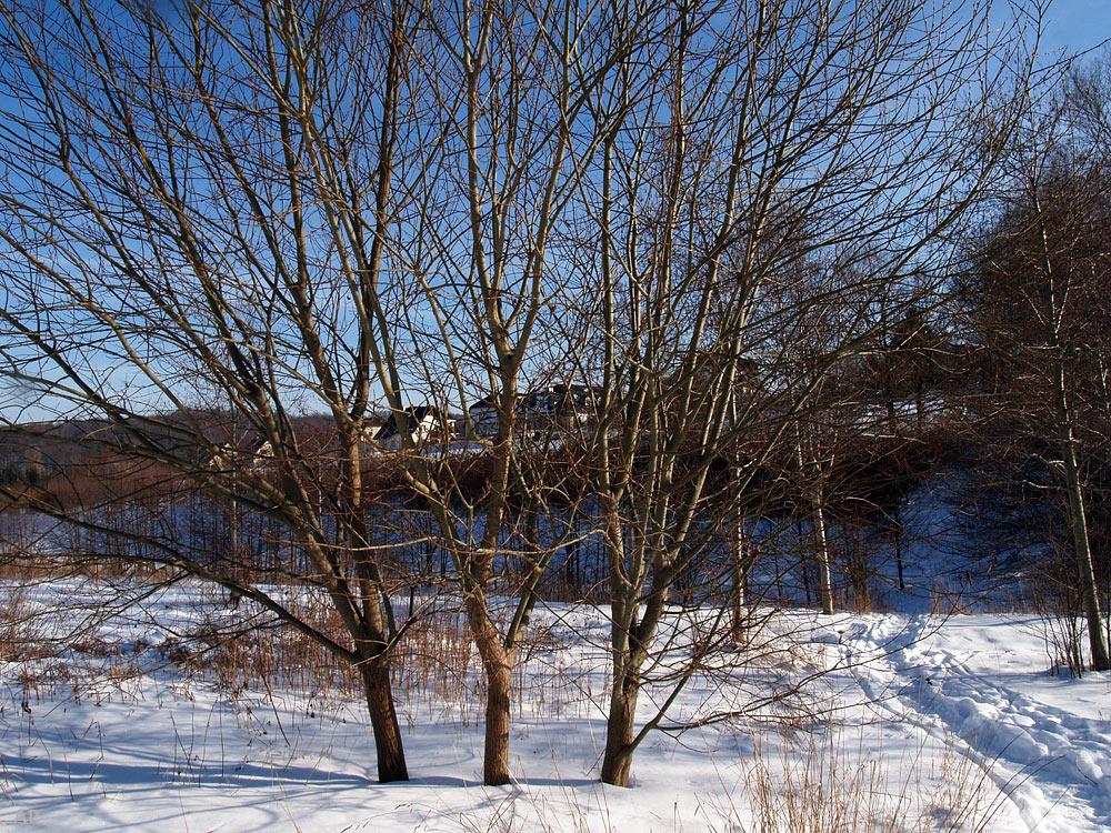 Drei Bäume...