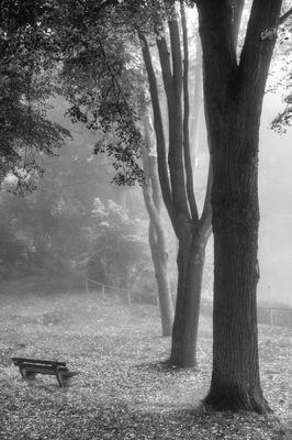 Drei Bäume s/w