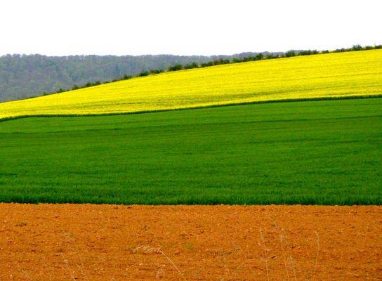 drei Bauern, drei Felder