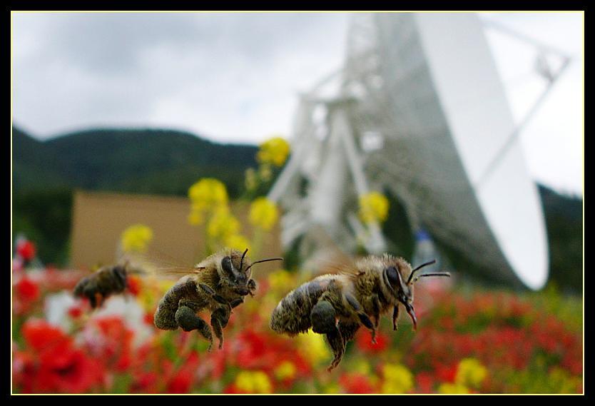 Drei Bienen