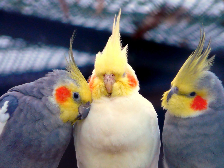 Drei die sich mögen