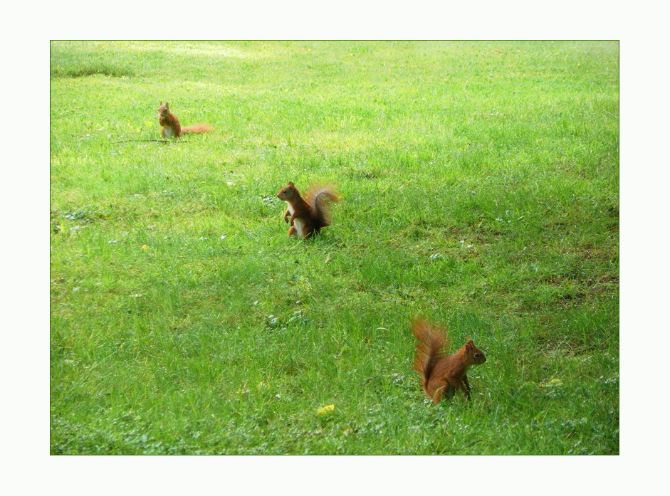 Drei Eichhörnchen