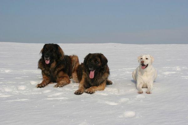 Drei Freunde