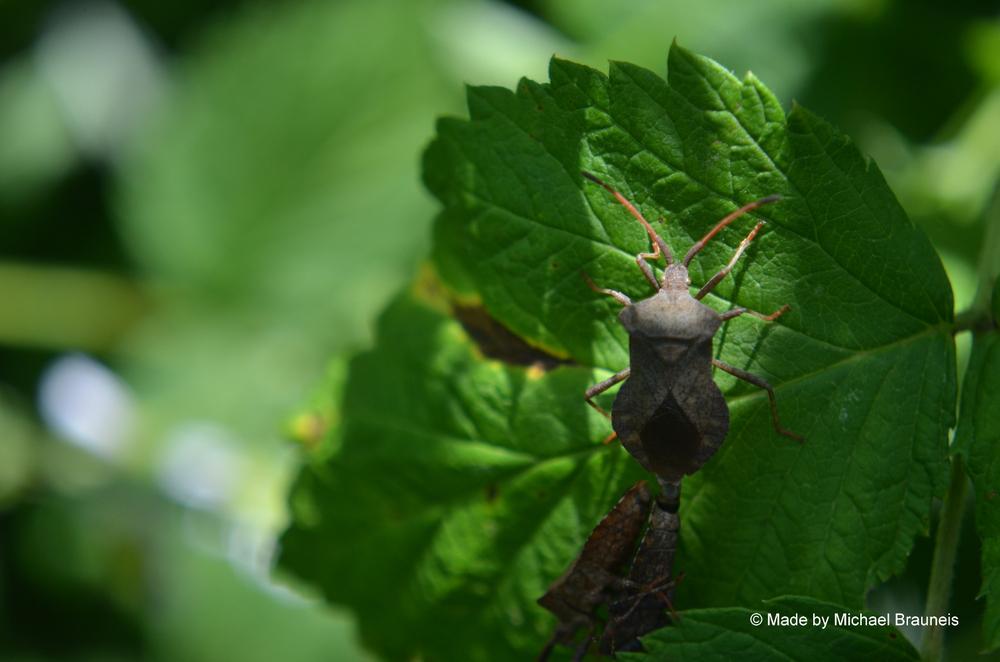 Drei Käfer auf einem Blatt