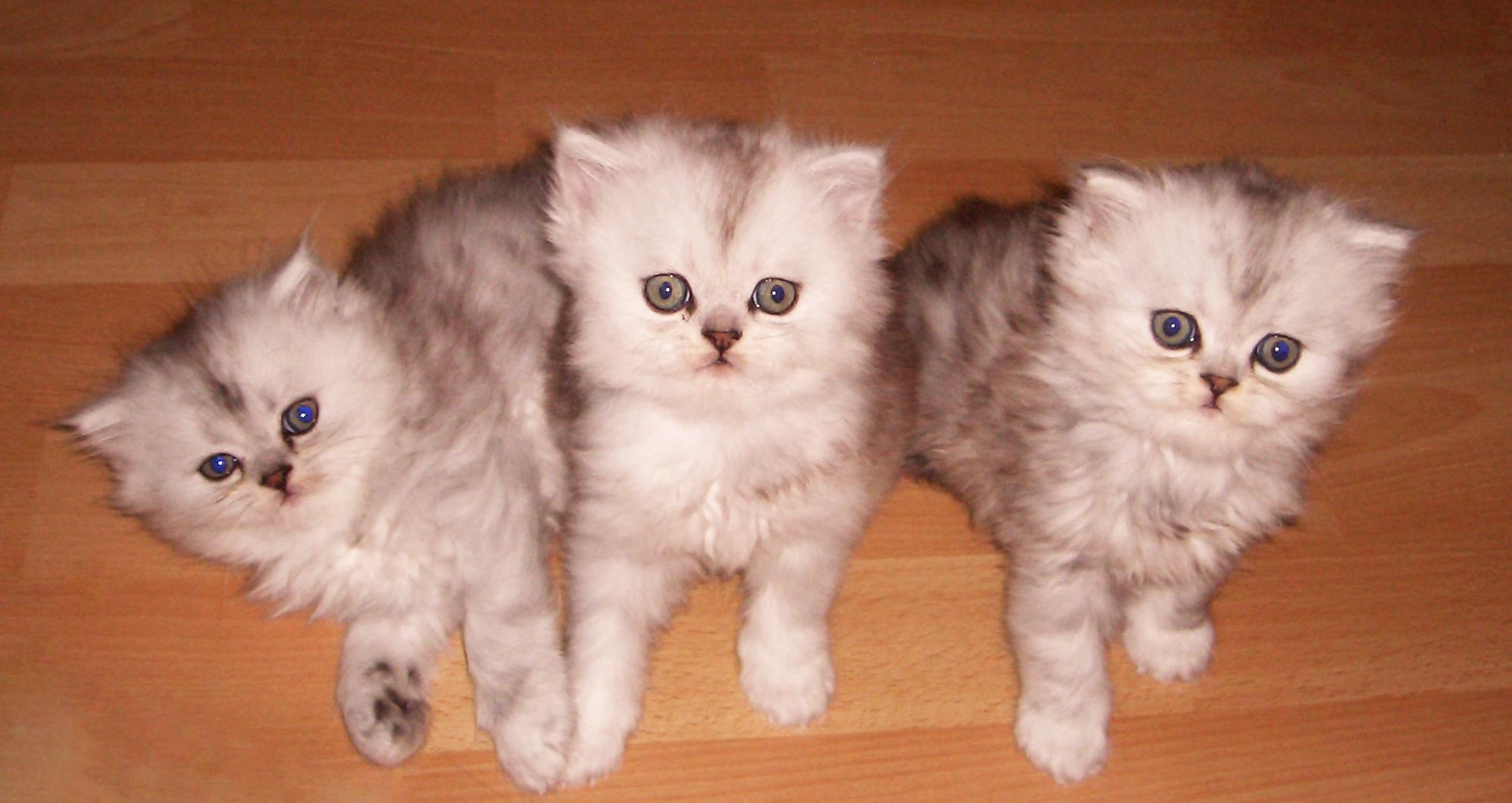 Drei Kittens