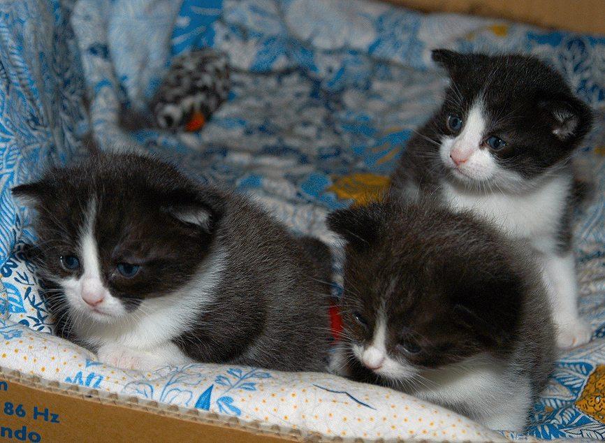 Drei kleine Helden, wir sind gekommen.....