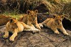 Drei kleine Könige