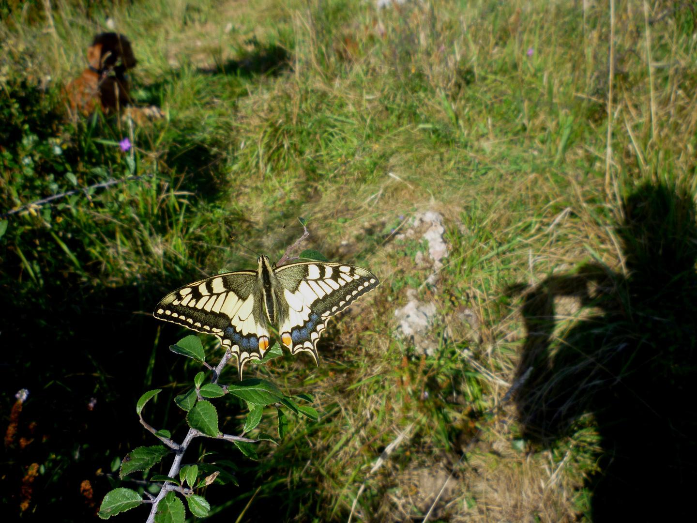 Drei Motive:Schmetterling,mein Hundl und mein Schatten.