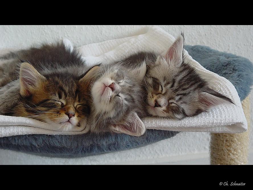 Drei müde Rabauken