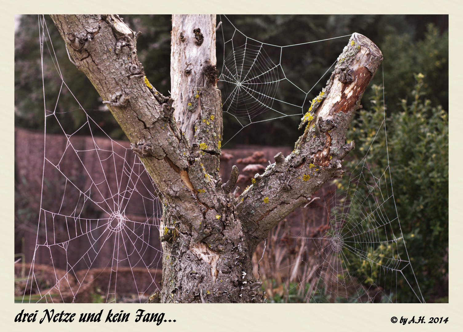 drei Netze und kein Fang...