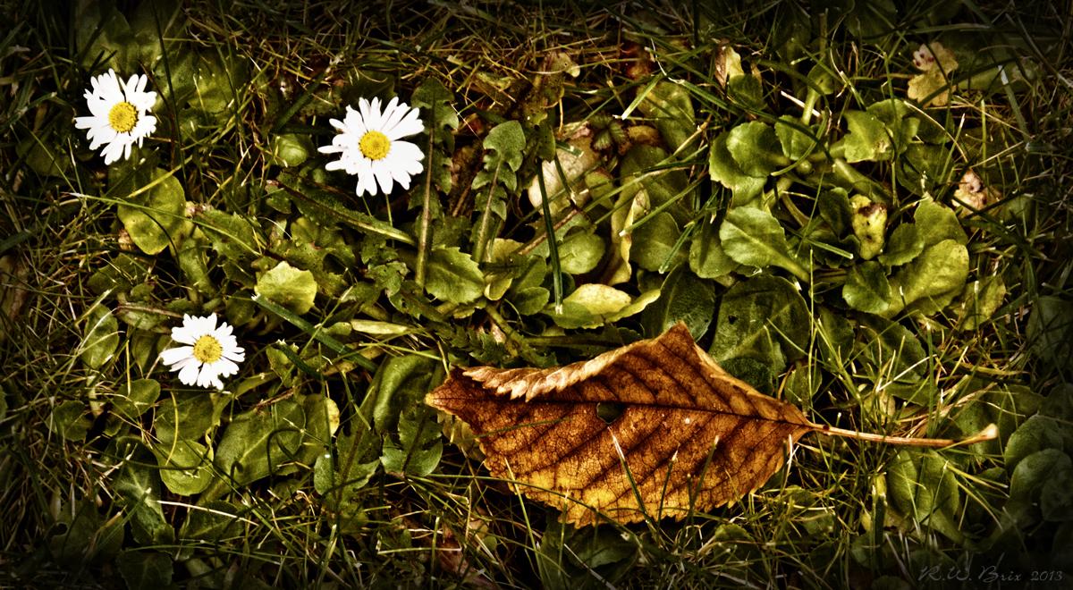 Drei neue Blüten und ein altes Blatt