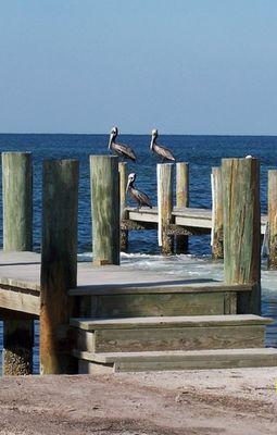 Drei Pelikane
