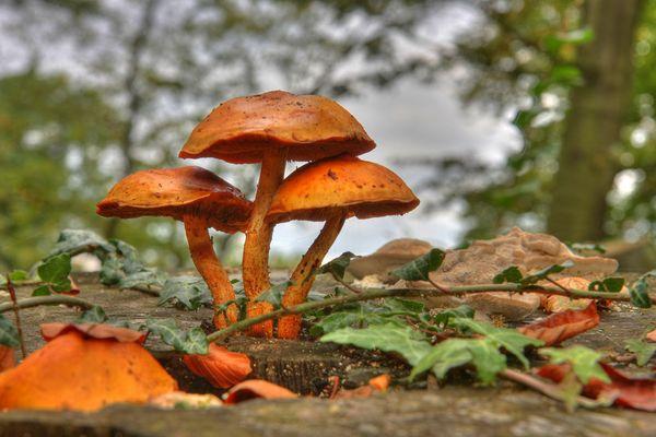 Drei Pilze, drei Bilder, ein DRI