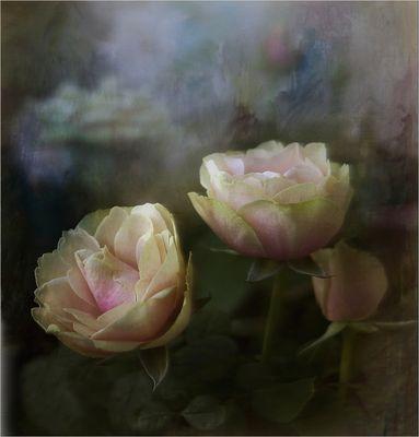~Drei Rosen~