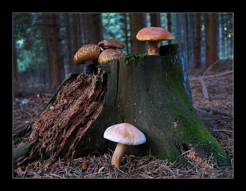 Drei verschieden Pilzarten...