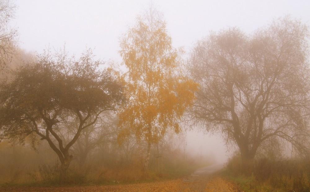 drei Weggefährten im Nebel