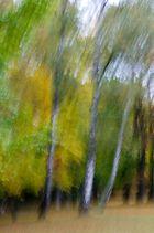 Drei weiße Birken....