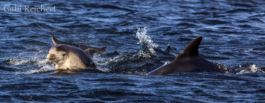 drei Wochen altes Delfinbaby